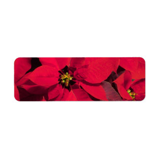 Poinsettia labels Stickers
