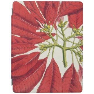 Poinsettia Pulcherrima (colour litho) iPad Cover