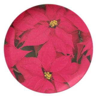 poinsettias Christmas holidays season's greetings Dinner Plates