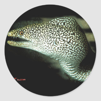Poised and Ready-Guinie Fowl Eel Classic Round Sticker