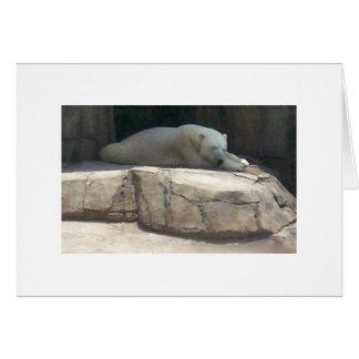 Polar Bear at the Pittsburgh Zoo and Aquarium Card