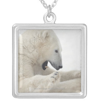 Polar bear engaging in a fight with another bear square pendant necklace