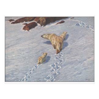 Polar bear family by Richard Friese Postcard