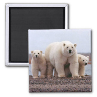Polar Bear Family Square Magnet