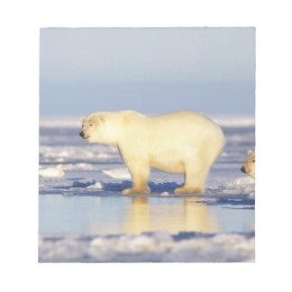 Polar bear sow with cub, pack ice, coastal notepad