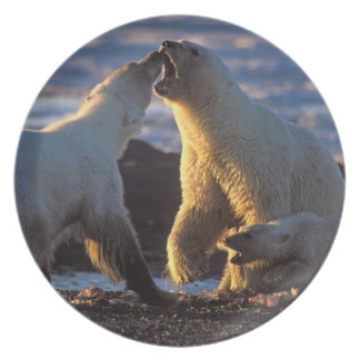 Polar bear sows with cub at side, 1002 coastal plate