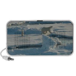 Polar Bear Notebook Speaker
