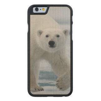 Polar Bear, Ursus Maritimus, Adult Carved Maple iPhone 6 Case