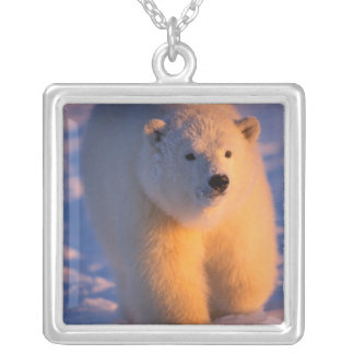polar bear, Ursus maritimus, cub on the pack Silver Plated Necklace