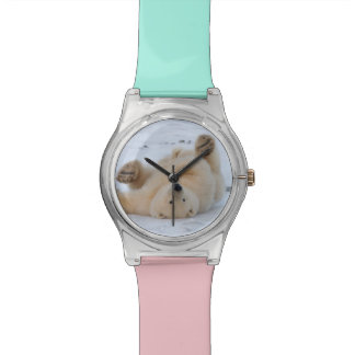 polar bear, Ursus maritimus, cub rolling 3 Watch