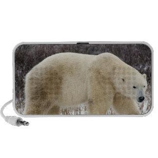 Polar Bear Ursus maritimus) in Churchill iPhone Speaker