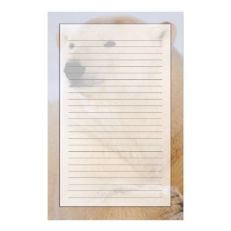polar bear, Ursus maritimus, resting on the Stationery