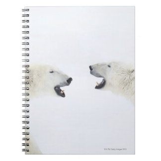Polar Bears standing on snow after playing Notebooks