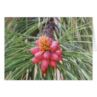 Pollen Flowers of Ponderosa Pine Card