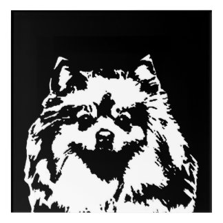 Pomeranian Black & White Acrylic Wall Art