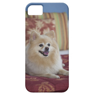 Pomeranian dog in pet friendly hotel room iPhone 5 case
