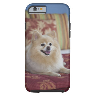 Pomeranian dog in pet friendly hotel room tough iPhone 6 case