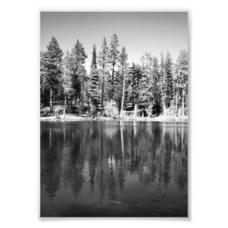 Ponderosa Pines Reflection Photo