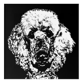 Poodle Black & White Acrylic Wall Art
