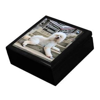 Poodle - Brulee - Trainer Gift Box