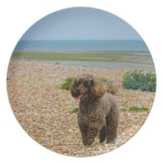 Poodle dog miniature beautiful photo at beach plate