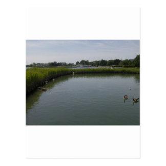 Poole Park, Dorset Postcard