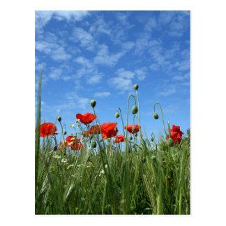 Poppy Field Post Card