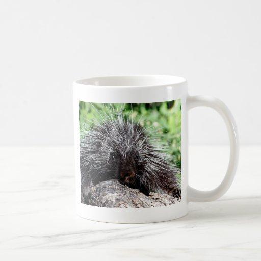 Porcupine Lounging Coffee Mug