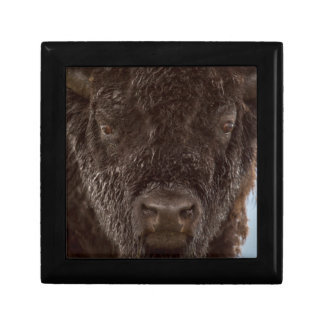 Portrait Of A Bison Bull In The Rain Gift Box