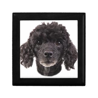 Portrait of a black poodle gift box