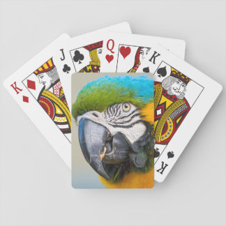Portrait of a Blue and Yellow Macaw Playing Cards