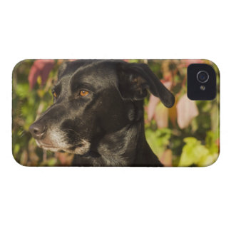 Portrait Of A Dog iPhone 4 Cases