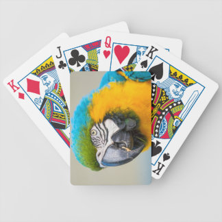 Portrait of a Rainbow Lorikeet Bicycle Playing Cards