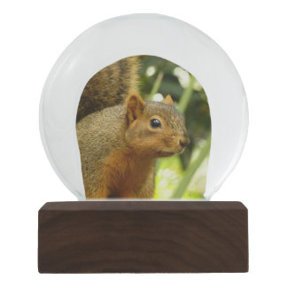 Portrait of a Squirrel Nature Animal Photography Snow Globes