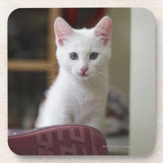 Portrait of a white kitten, Sweden. Coaster