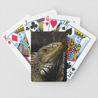 Portrait of an Iguana Bicycle Playing Cards