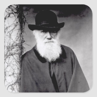 Portrait of Charles Darwin  1881 Square Sticker