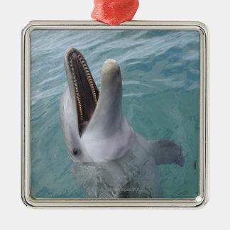 Portrait of Common Bottlenose Dolphin, Caribbean Christmas Ornament