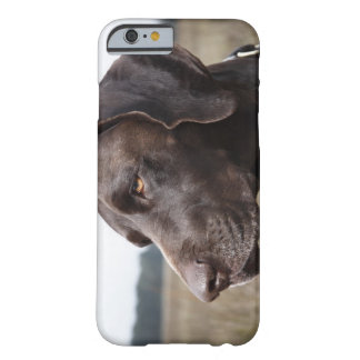 Portrait of Dog, Houston, Texas, USA Barely There iPhone 6 Case