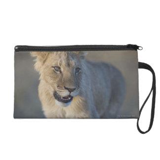 Portrait of Lion Cub (Panthera Leo), Namibia Wristlet