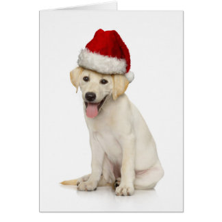 Portrait of white Labrador retriever Card