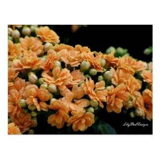 Postcard Floral Orange Begonias