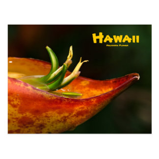 Postcard: Heliconia Flower Postcard