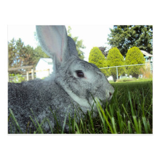 Postcard of a beautiful rabbit.