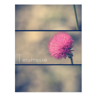 Postcard Tenderness