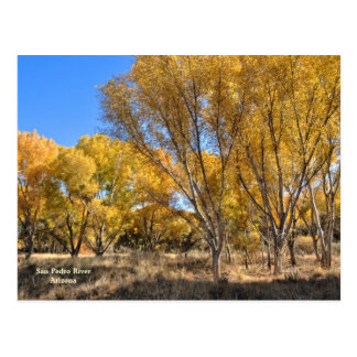 Postcard: Yellow Cottonwoods Postcard