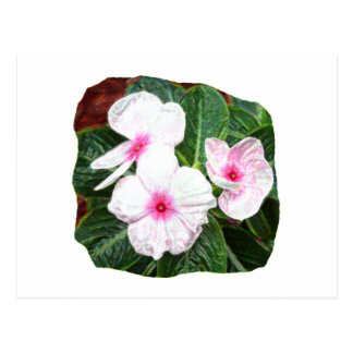 Posterized Purple Pinwheel Flowers Photograph Postcard