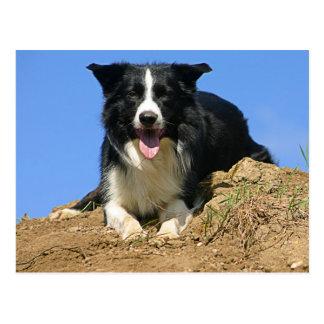 Postkarte liegender Hund Border Collie