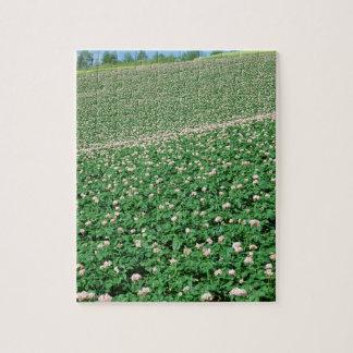 Potato Field 3 Jigsaw Puzzle