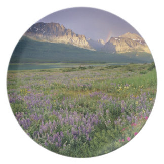 Prairie wildflowers along Lake Sherbourne in the Plate